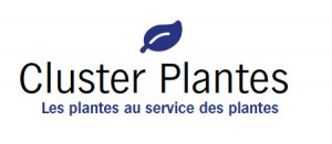 Cluster Plantes